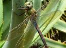 Hin und wieder findet man zwischen all der Flora auch ein bisschen Fauna.