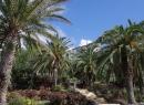 Am oberen Ende des steil angelegten Parks steht das Hotel Taoro.