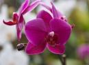 Der Beweis: Es gibt tatsächlich Orchideen dort. Ein Besuch lohnt sich, allerdings kostet der Eintritt Geld.