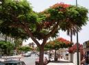 Impressionen aus dem Ortsteil La Paz von Puerto de la Cruz.