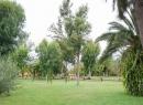 taoro-park-puerto-de-la-cruz_11