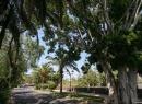 taoro-park-puerto-de-la-cruz_14