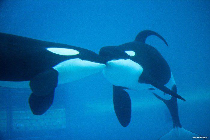 Blick hinter die Kulissen des Orca Ocean bei der Discovery Tour.