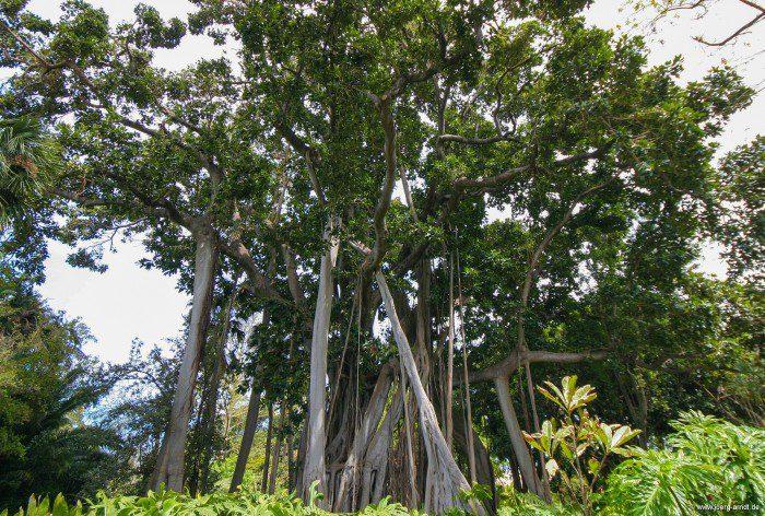 "Die Flora im ""Botánico"" ist absolut sehenswert."
