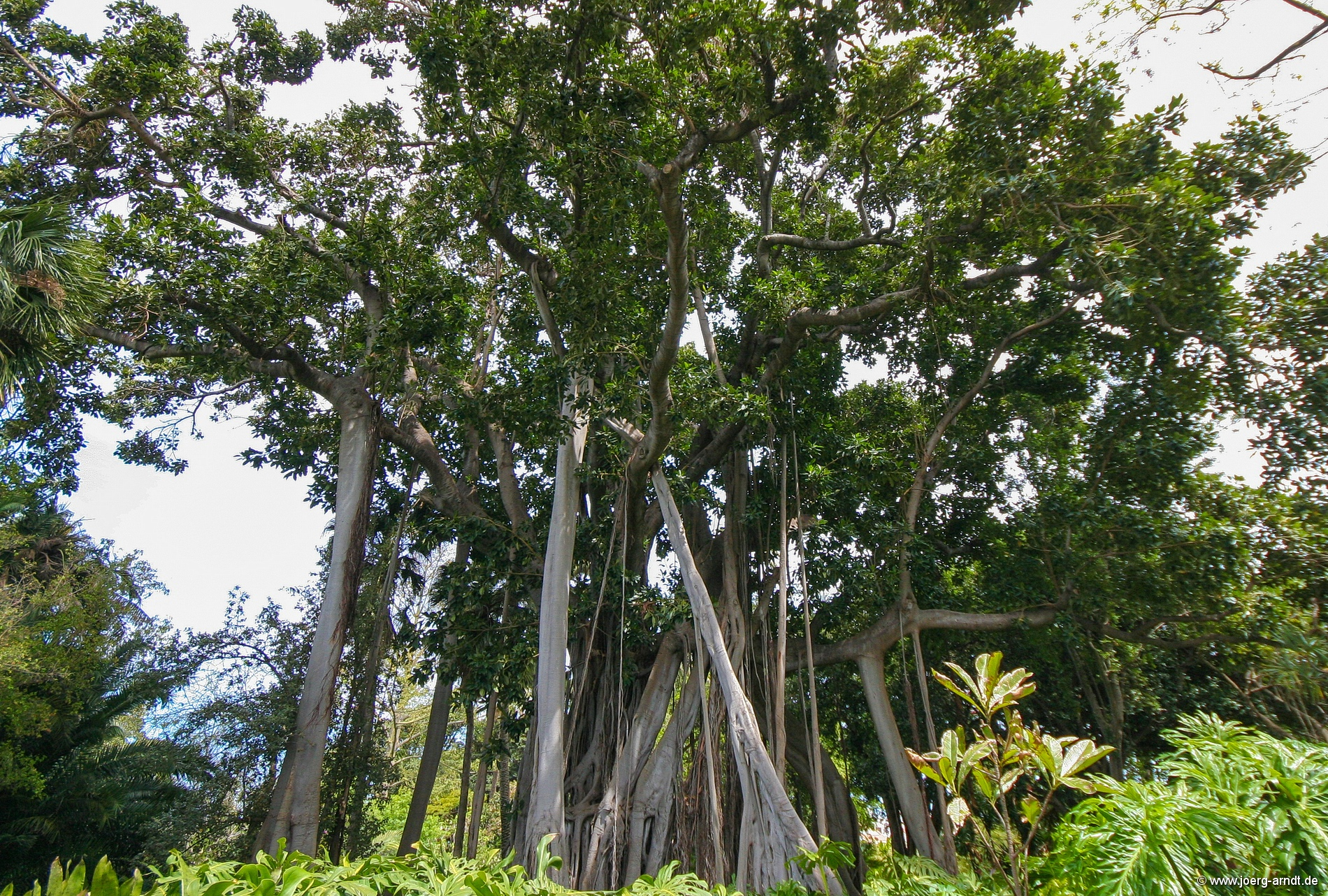Jardin botanico in puerto de la cruz puerto de la cruz for Sanse 2016 jardin botanico