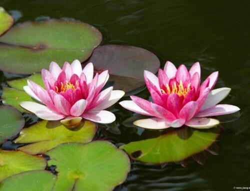 El Botánico: Puertos botanischer Garten