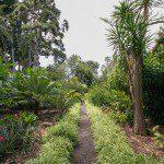 Ein Weg im Botanischen Garten von Puerto de la Cruz.