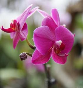 Auch viele Orchideen gibt es im Sitio Litre zu sehen.