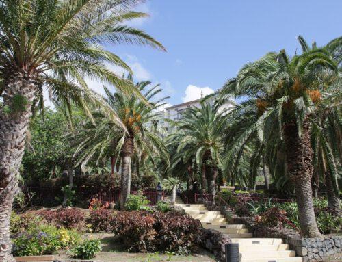 Taoro Park: Über den Dächern der Stadt